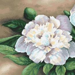 Pattern online - Charming peonie I