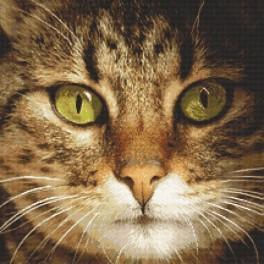 Pattern online - Cat Lucky
