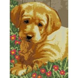 Puppy - Tapestry canvas