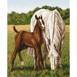 Mare with colt - Tapestry canvas