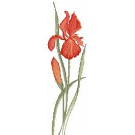 A red iris - Cross Stitch pattern