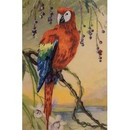 Kit with printed pattern, mouline and printed background - Scarlet macaw