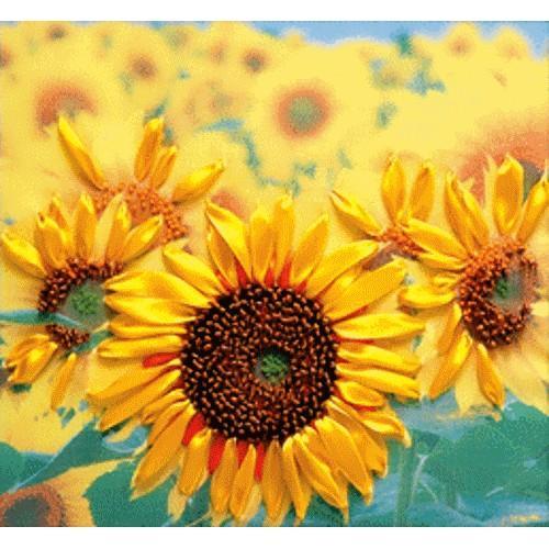 Ribbon kit - Sunflowers
