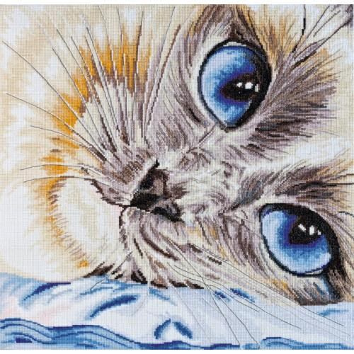 Kit with mouline - Sapphire eyes