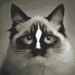 Tapestry aida - Cat ragdoll