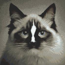 Tapestry canvas - Cat ragdoll