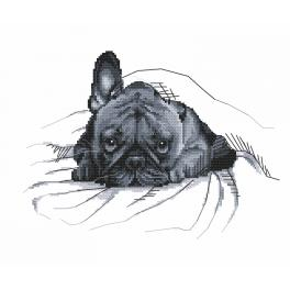 Graphic pattern - French bulldog - It was not me