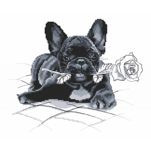 Graphic pattern - French bulldog - I'm sorry