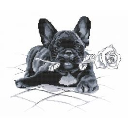 Tapestry aida - French bulldog - I'm sorry