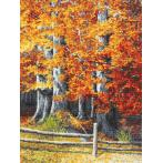 Tapestry aida - Autumnal beeches