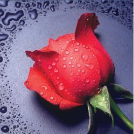 Diamond painting kit - Red rose