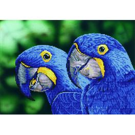 DD9.023 Diamond painting kit - Blue hyacinth macaws