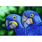 DD9.023 Diamond painting kit - Blue hyacinth macaws