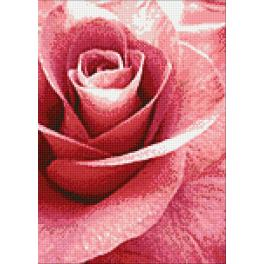 WD019 Diamond painting kit - Pink rose