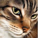 WD282 Diamond painting kit - Mysterious cat