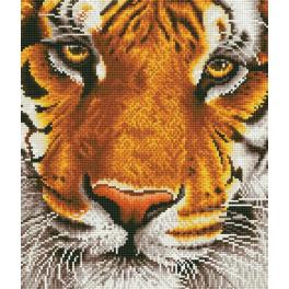 DD8.001 Diamond painting kit - Bengal magic tiger