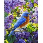 Diamond painting kit - Bird
