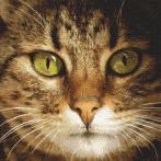 Diamond painting kit - Cat Lucky