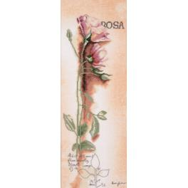 Cross stitch kit and printed background - Rosa botanical