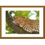 Kit with mouline and printed background - Jaguar