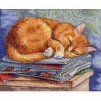 Cross stitch kit - Studying cat