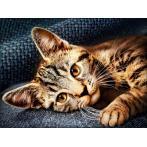 M AZ-1700 Diamond painting kit - Cat Barsik