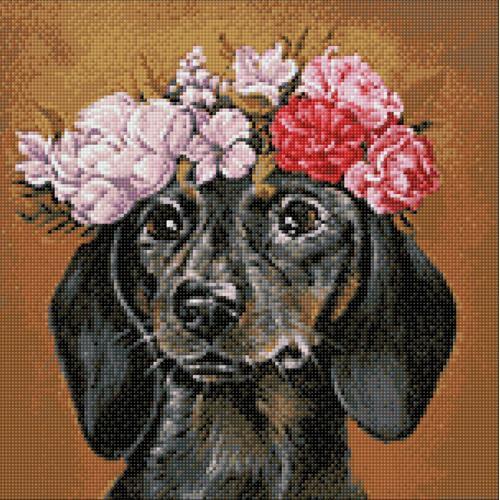 WD2465 Diamond painting kit - Dachshund in flowers