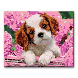 CZ K00031 Painting by numbers kit - Puppy in hydrangeas