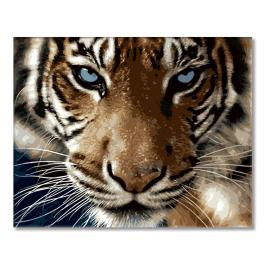 GX8767 Painting by numbers - Tiger look