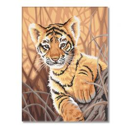 VPN-0189076 Painting by numbers - Tiger cub