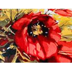 PC4050214 Painting by numbers - Bouquet of poppies