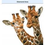 DD8.017 Diamond painting kit - Tall and tender