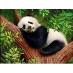 M AZ-1826 Diamond painting kit - Sleepy panda