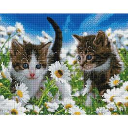PD4050167 Diamond painting kit - Kittens on a chamomile field