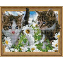 5PD4050038 Diamond painting kit - Kittens in a chamomile field