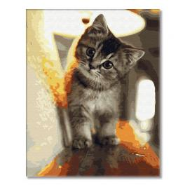 GX29845 Painting by numbers - Tiny kitten